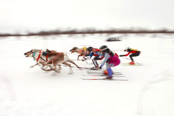 Reindeer Racing World Cup